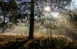 Forest tree branches sunbeams view. Forest sunbeams. Forest tree sunbeams. Sunbeams forest