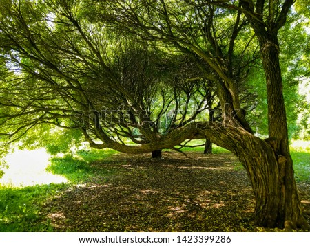 Forest tree shadow sunlight view. Spreading tree branch. Hanging tree branch. Forest hanging tree branch in summer