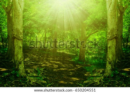 forest tree sunlight park nature background rays wood #650204551