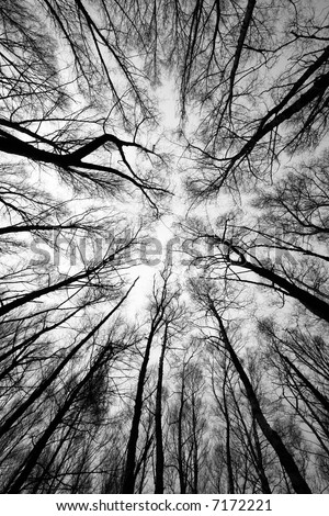 forest trees after fire - black and white