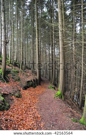 forest trees along an autumn forest path