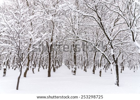 Forest Trees Covered In Winter Snow