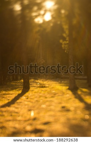 forest trees in the sun
