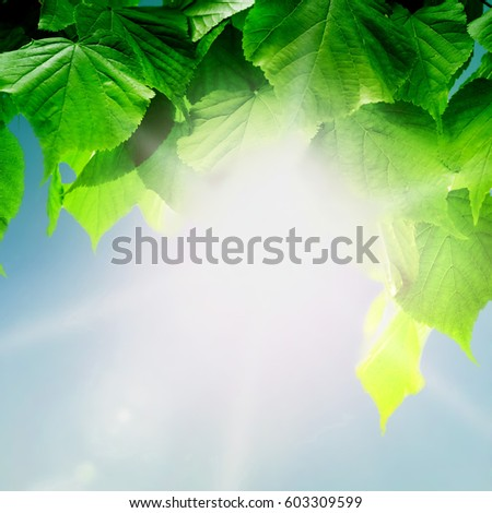 forest trees leaf. nature green wood sunlight backgrounds. Hello spring #603309599
