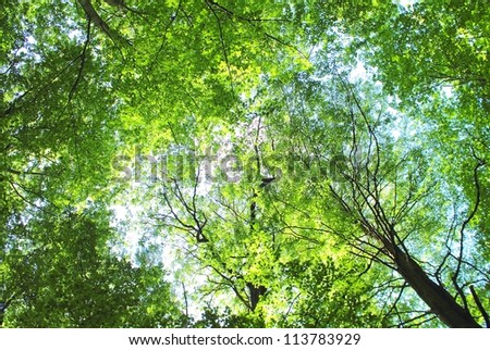 Forest trees leaves background