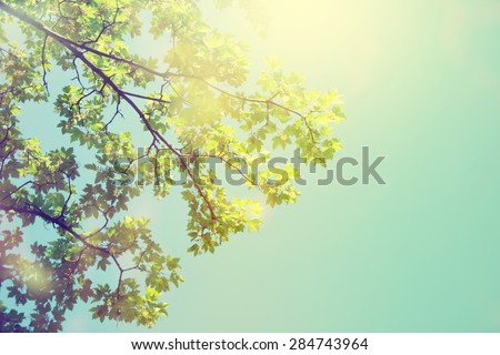 Forest trees. Nature green sunlight backgrounds.