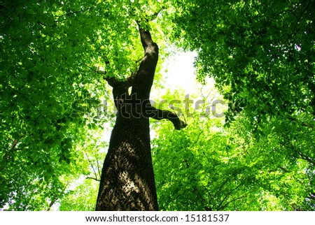forest trees. nature green wood backgrounds. Beauty natural background - stock photo