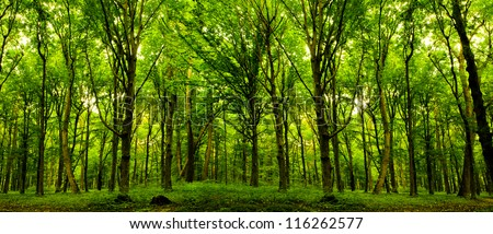 forest trees. nature green wood sunlight backgrounds. #116262577