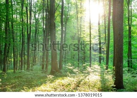 Forest trees. nature green wood sunlight backgrounds #1378019015
