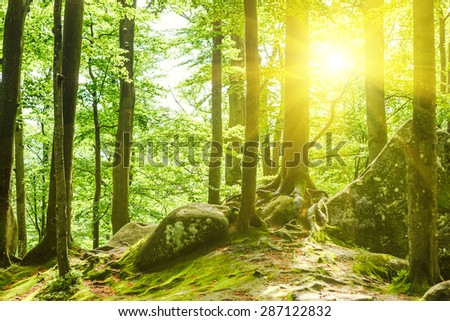 Forest trees. nature green wood sunlight backgrounds #287122832