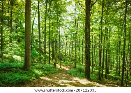 forest trees. nature green wood ...