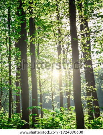 Forest trees. nature green wood sunlight backgrounds. vertical image