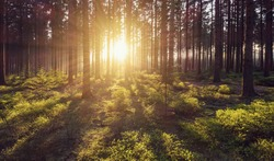 forest trees nature green wood sunlight view
