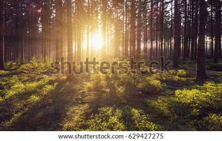 forest trees nature green wood sunlight view #629427275