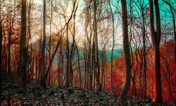 Forest trees. nature green wood warm tone of summer season with sunset and mountain background in Thailand