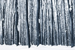 forest trees nature snow wood backgrounds