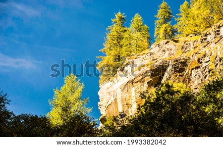 Forest trees on a mountain cliff. Mountain cliff trees. Mountain forest cliff trees
