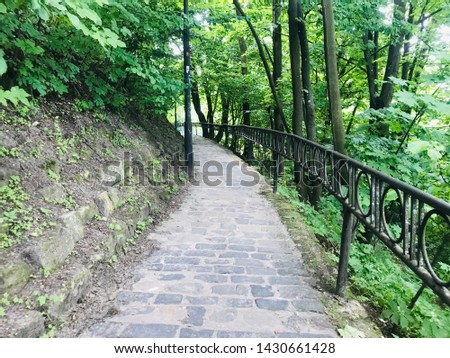 Forest trees staircase road going among the trees buying green natural backgrounds panoramic angles panoramic angles different from each other natural to tree roots.