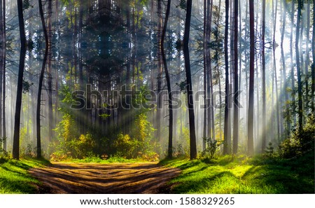 Forest trees sunlight shadows background. Forest mist shadows. Shadow trees in mist forest. Forest mist shadows landscape