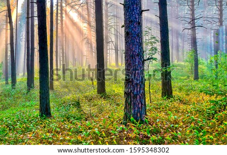 Forest trees sunrise shadows view. Sunrise in forest. Forest sunrise scene. Sunrise forest trees