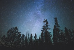 Forest trees under Milky Way in night sky.