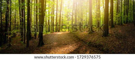 Forest trees with sidewalk of fallen leaves. Nature green wood lovely sunlight backgrounds.  Foto d'archivio ©