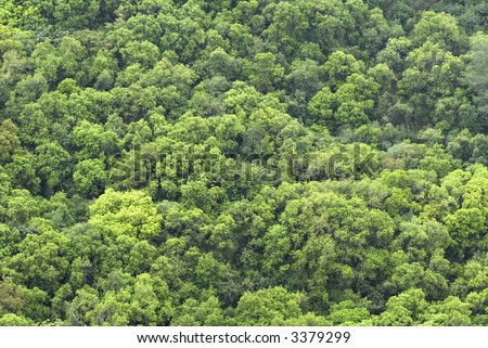 Forest treetops on the hill side background
