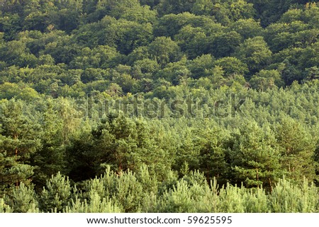 Forest treetops on the hill side - background