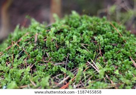 Forest vegetation in summer #1187455858