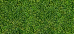 forest view from above, aerial top view with copy space design for web banner