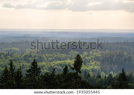 forest view from above with fog and mist, far horizon in summer landscape
