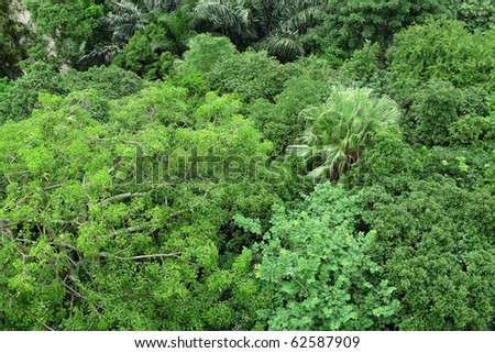 forest view from high - stock photo