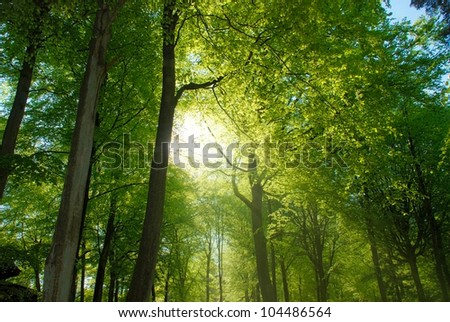 Forest Walk with bright sunlight shining through trees