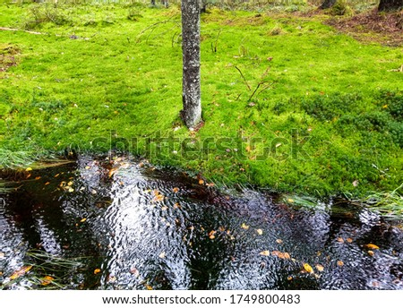 Forest water green moss view. Green moss frest river creek. Forest water green moss. Mossy forest water