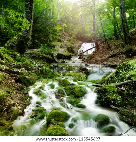forest waterfall and rocks covered with moss #115545697