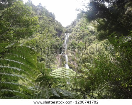 Forest waterfall in Aucklands beautiful Waitakere Ranges.  The Waitakere Ranges Kitekite Falls were formed by volcanic activity over a period of 22 million years.  #1280741782