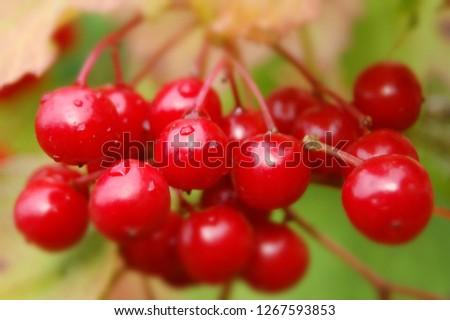forestwild berry #1267593853