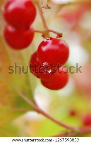 forestwild berry #1267593859