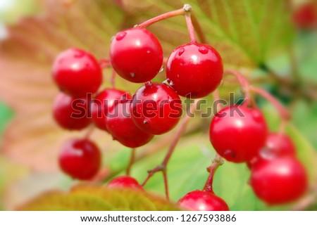 forestwild berry #1267593886