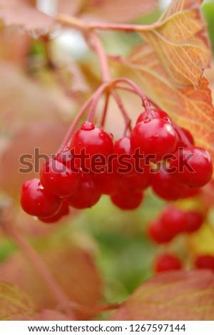 forest wild berry #1267597144