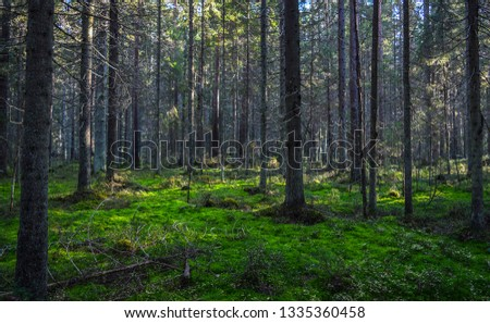 Forest wilderness trees landscape. Forest trees moss background. Deep forest trees landscape. Forest moss trees view