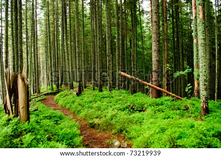 Forest with fallen trees and green plants