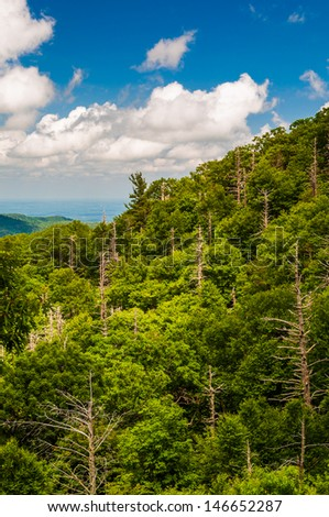 Forest with many dead trees, seen from Skyline Drive in Shenandoah National Park, Virginia.
