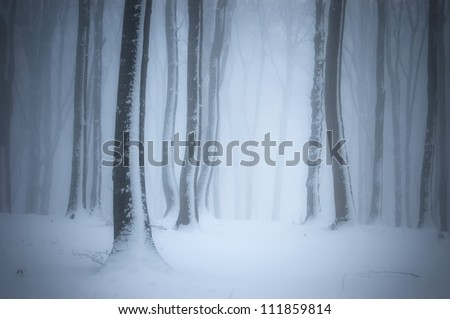 forest with mist in winter