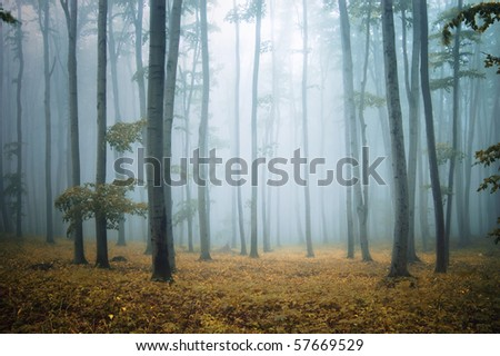 forest with orange leafs and grass and elegant trees