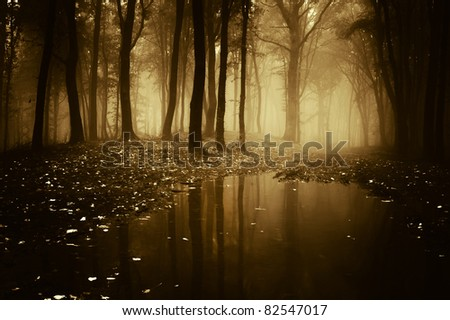 forest with pond in autumn