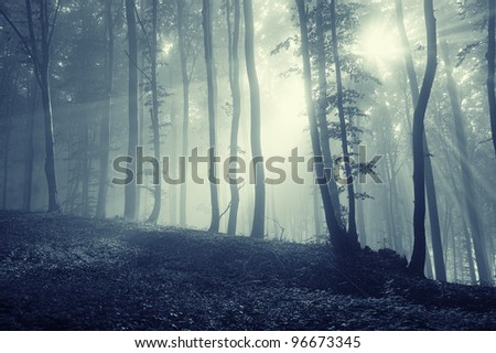forest with sun rays through tree branches