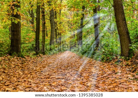 Forest with sunbeams in golden autumn #1395385028