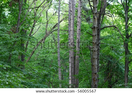 Forest with tall trees in summer
