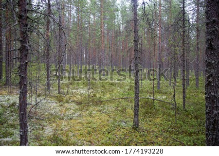Forest with trees and moss, focus on the middle point